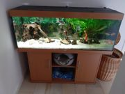 Aquarium Juvel 450 Liter Kaltwasserbecken