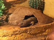 Gecko und Terrarium