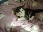 Liebe bkh kitten