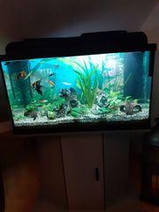 Aquarium 126 L komplett mit