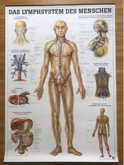 2x Anatomie Lehrtafeln 100x70 cm