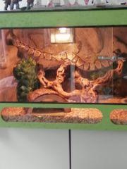 königspython mit komplett eingerichteten terrarium