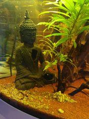 Aquarium Eckkombination Juwel Trigon 190