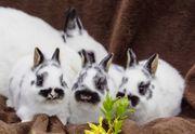 Kaninchen Farbenzwerge suchen ein neues