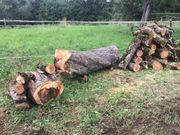 Holz - Apfelbaumholz - Apfelbaumstamm