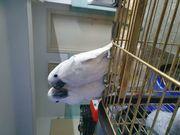 Gebe Papageien ein schönes Zuhause