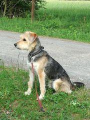 Dogwalker gesucht