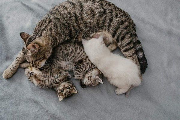 Baby katzen süße The Katzenjammer