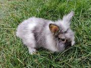 Bezaubernd süße Kaninchen Babys suchen