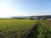 eingezäuntes Waldgrundstück in Wingbach zu