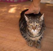 SARA - Liebes und aufgeschlossenes Katzenmädchen