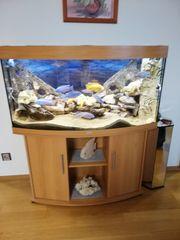 JUWEL Aquarium 260
