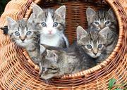 Frankfurt Katzensitter gesucht Nebenjob auf