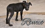Entdecken Sie mit Romeo die