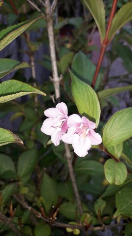 Topfbäume: Kleinanzeigen aus Nürnberg - Rubrik Pflanzen