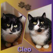 Wunderschöne Katze Cleo 1 5