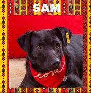 SAM II - er darf auch