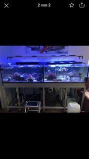 Meerwasser Aquarium Ablegerbecken XXL
