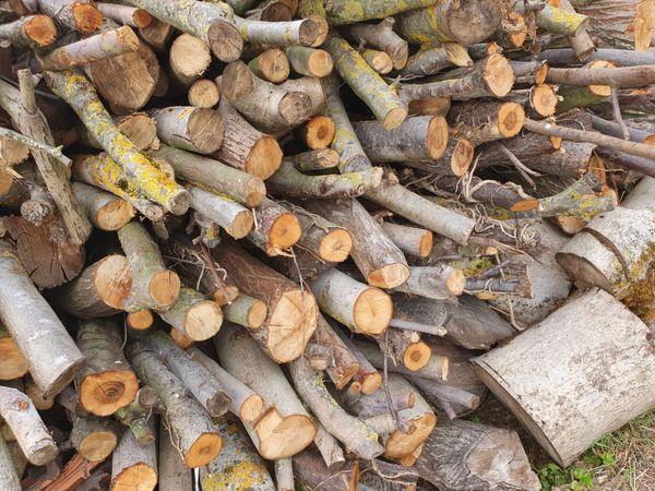 Brenbaumholz Kaminholz