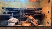 0 2 Leopardgeckos mit Terrarium