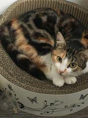 Katzen Trio Conny Siggi und