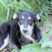 Leon lieber Hundebub sucht sein