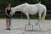 Praktikum mit Deinem eigenen Pferd