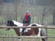 Reitbeteiligung auf Pinto Pony