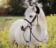Ponyführen Ponyreiten