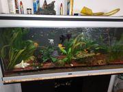Aquarium von Aquatlantis 200l