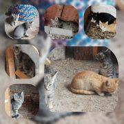 Baby Katzen Kater suchen ihr
