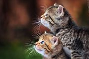 Tierbetreuung und Haussitter