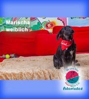 Marischa - sitzt Modell