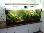 Schönes 450 Liter Aquarium komplett