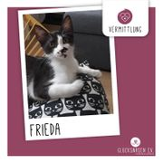Kätzchen Frieda sucht Dich zum