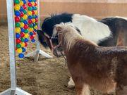 Weiterbildung Durchführung eines Pferdegestützten Teambuildings