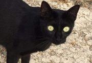 DANY - Liebes Katzenmädchen wartet auf