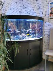 Meerwasser Aquarium 350 Liter