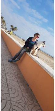 Gassi-Geh-Service Hundesitter Halbtagsbetreuung
