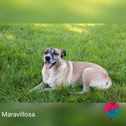 Maravillosa - Nicht nur ihr Name