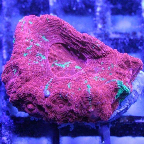 Wir haben wieder wunderschöne Korallen