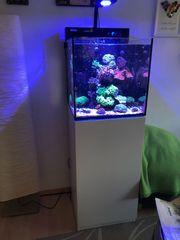 Red Sea Nano Max Meerwasseraquarium