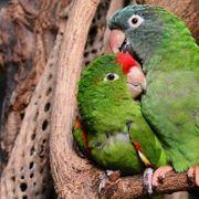 Suchen Papageien