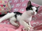 Wunderschöne Katze Lona sucht Zuhause