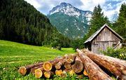 Brennholz Fichte 1Meter aus regionaler