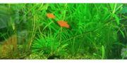 Baby Fische