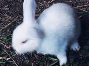 2 Kaninchenbabys ca 7 Wo
