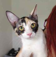 TIMBA - Super liebes Katzenmädchen wünscht