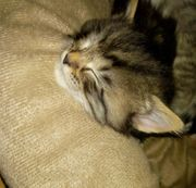 Wunderschöne Kitten