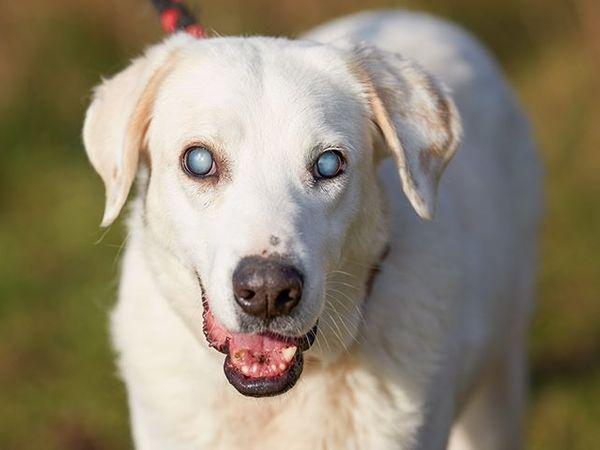 Agata Sucht Ihr Zuhause In Eckental Hunde Kaufen Und Verkaufen